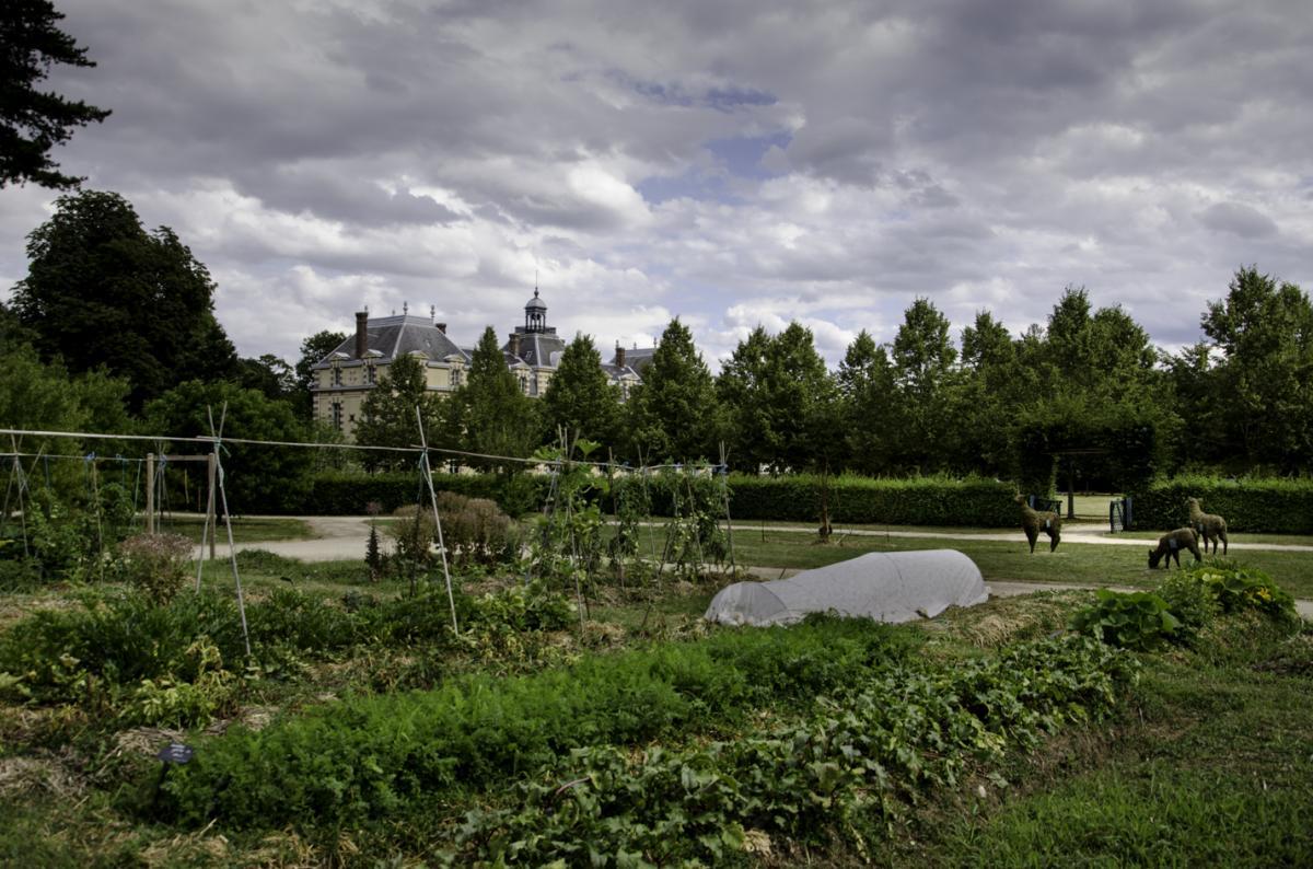 Août 2019 - Le potager