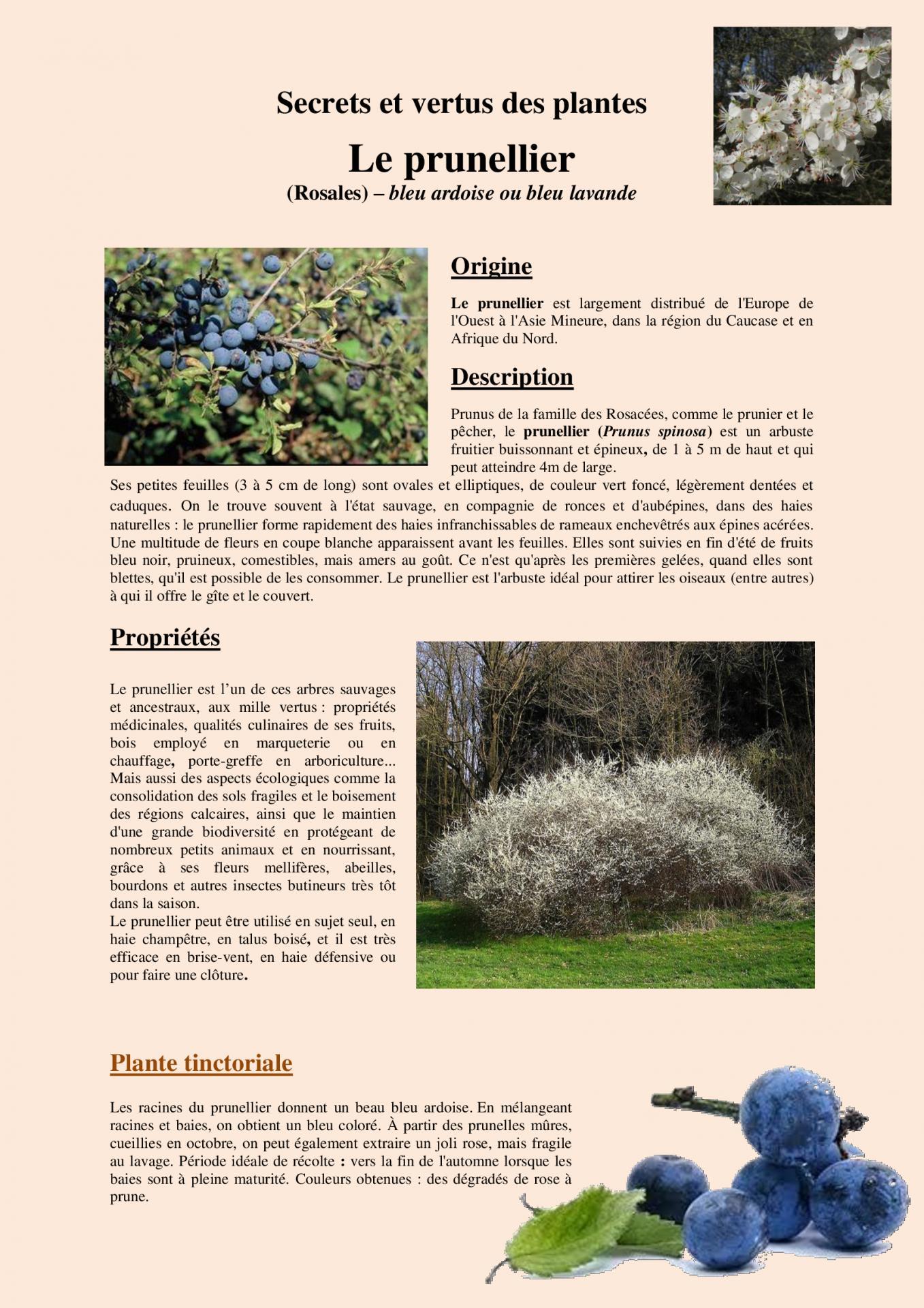 Le prunellier